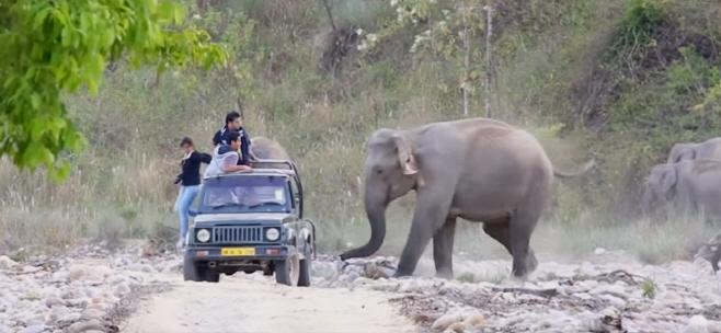 코끼리 공격