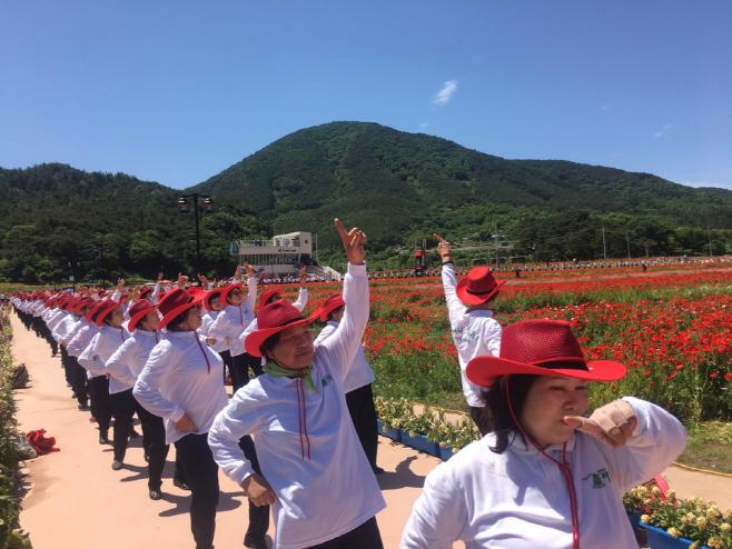 꽃양귀비 축제장 라인댄스