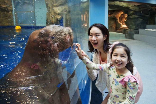 아쿠아플라넷 일산 바다코끼리