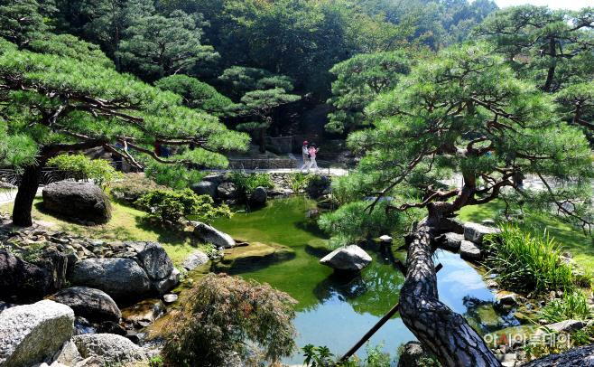 여행/ 화담숲 '소나무 정원'