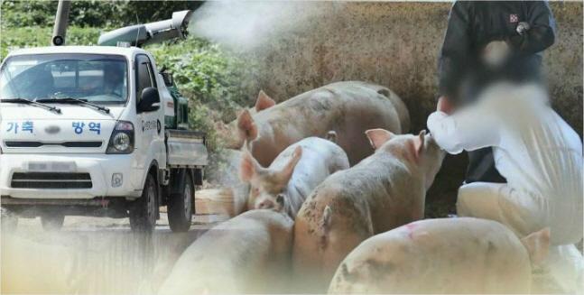 아프리카돼지열병 방역