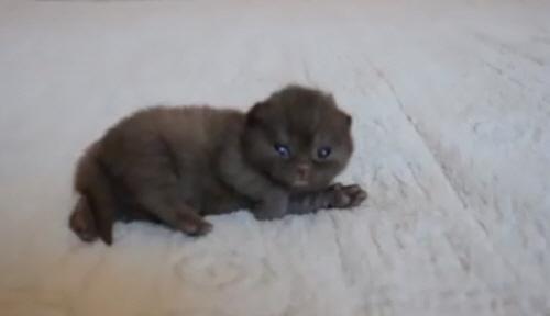 귀여움 터지는 아기 고양이