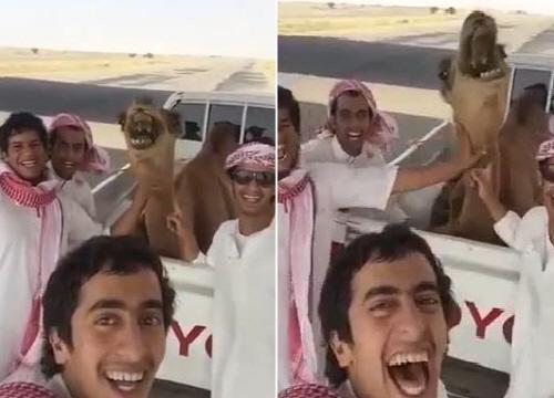 살인미소? 호탕하게 웃는 낙타