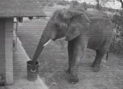 쓰레기 줍는 코끼리?