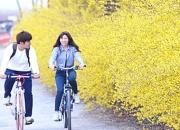 우리 동네 봄꽃 언제 필까?