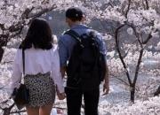 '벚꽃 데이트'엔 역시…