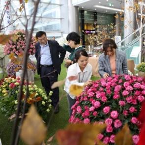 '도심 속 가을' 장미와 국화 생생꽃길을 걸어요!