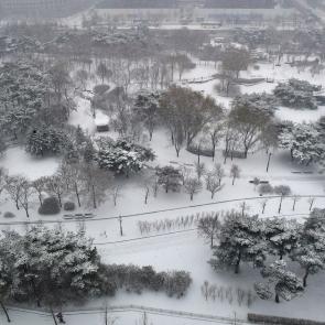 하얗게 눈 쌓인 여의도공원
