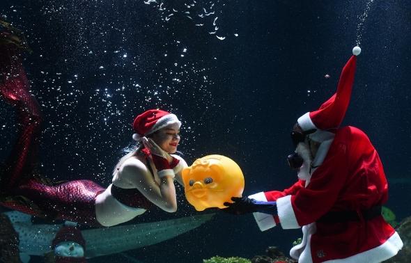 산타가 인어에게 전하는 황금돼지