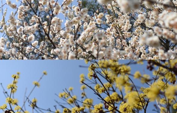 설레임 가득한 봄