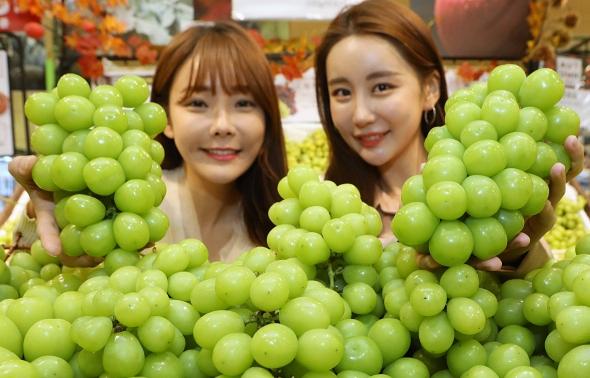 롯데마트, 영천 샤인머스켓 2만4800원 판매