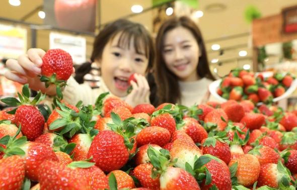 돌아온 딸기 계절…설향 딸기 맛보세요