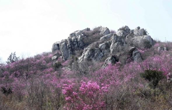 연분홍으로 갈아입은 강진 주작산(朱雀山)