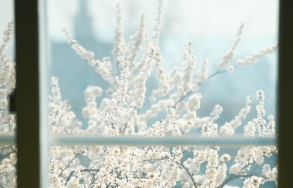 보는 이 없는 봄