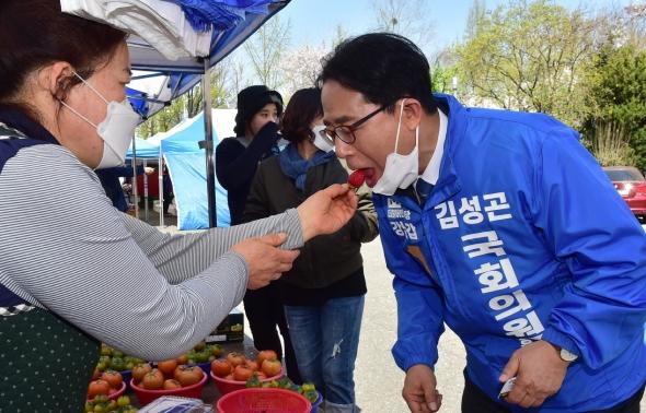 딸기 시식하는 김성곤 강남갑 후보