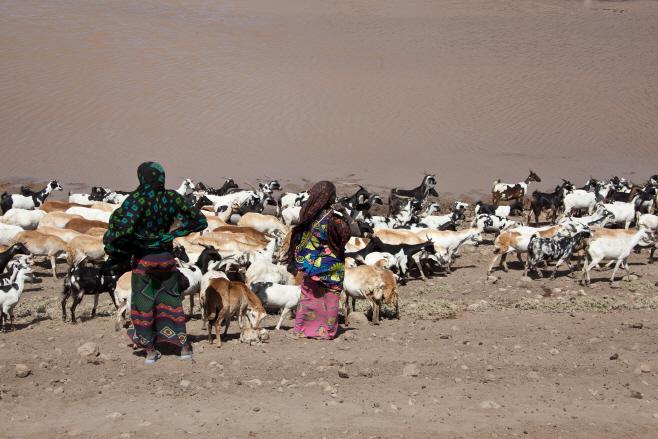 아프리카 염소치기