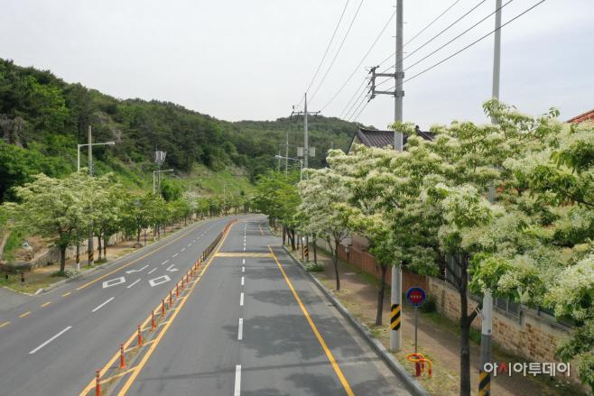 5.25 김해시, 이팝나무 명소화 추진 (1)