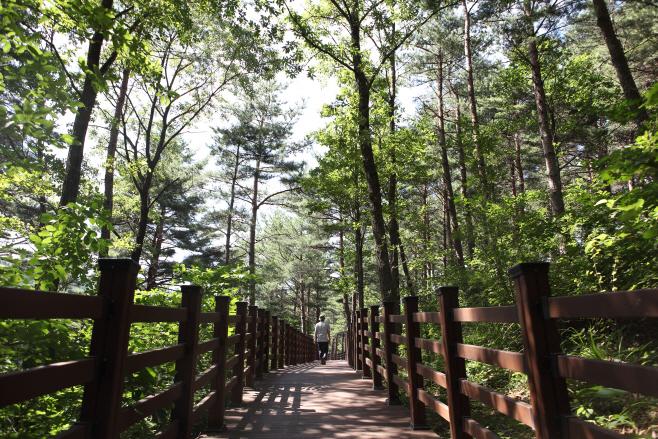 여행/ 국립 대관령 치유의 숲