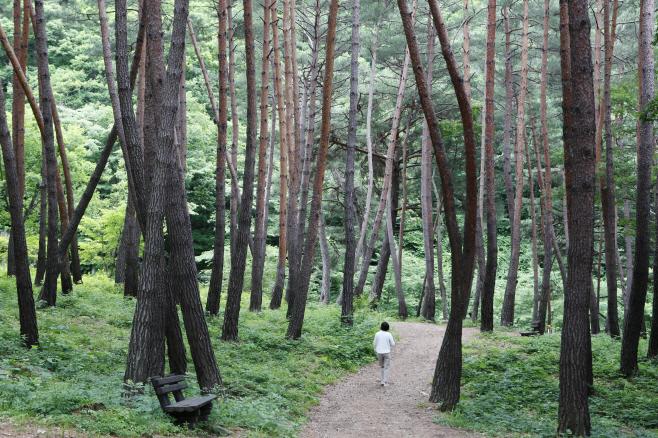 여행/ 검마산자연휴양림 산림욕장