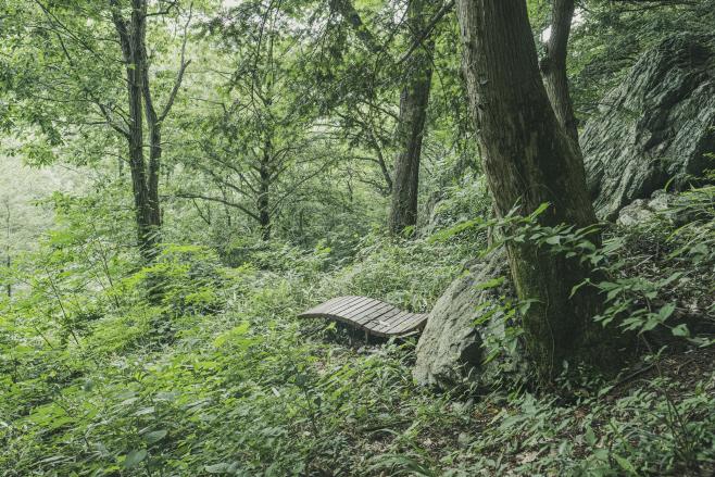여행/ 보림사 비자나무 숲