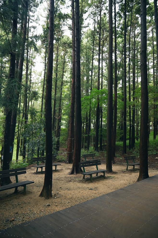 여행/ 대신공원 숲길 잘 마련된 산책로