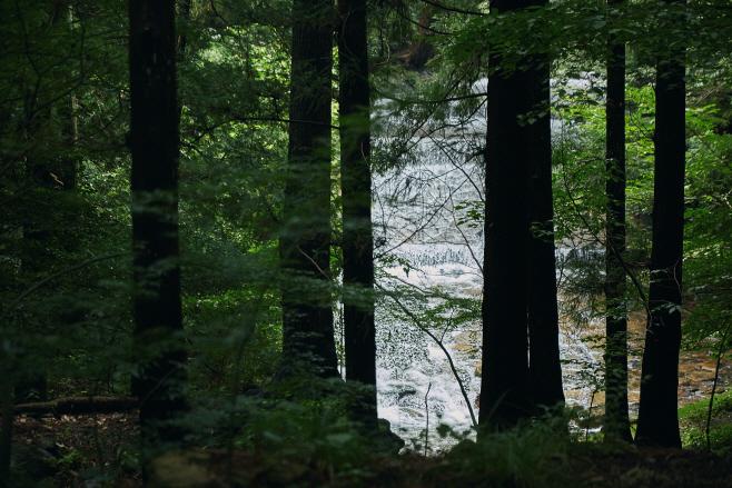 여행/ 나무사이로 보이는 계곡_1