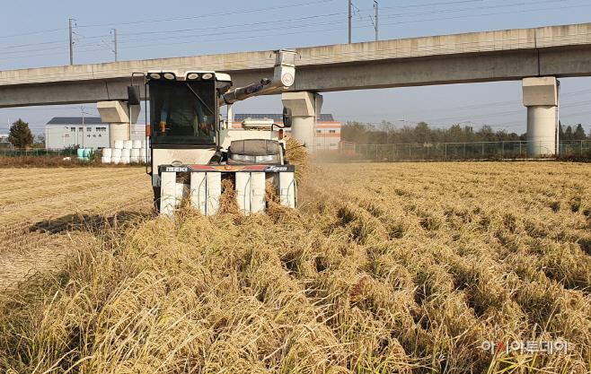 도담쌀 수확 현장