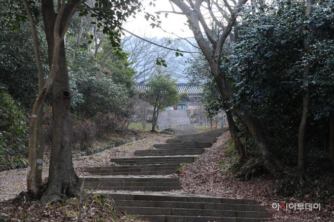 여행/ 미황사 동백숲