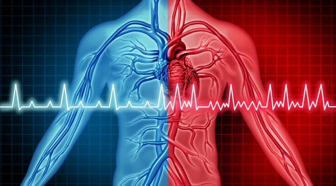 심장박동 측정기