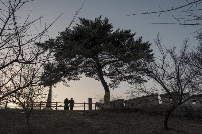여행/ 저녁무렵의 '윤동주 소나무'