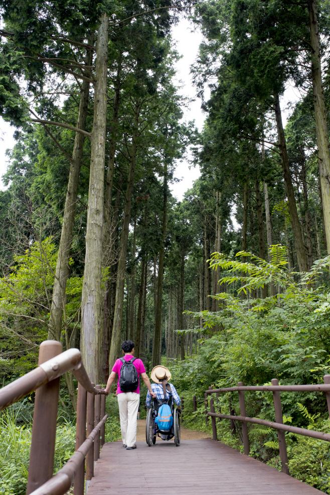 여행/ 미래사 편백나무 숲