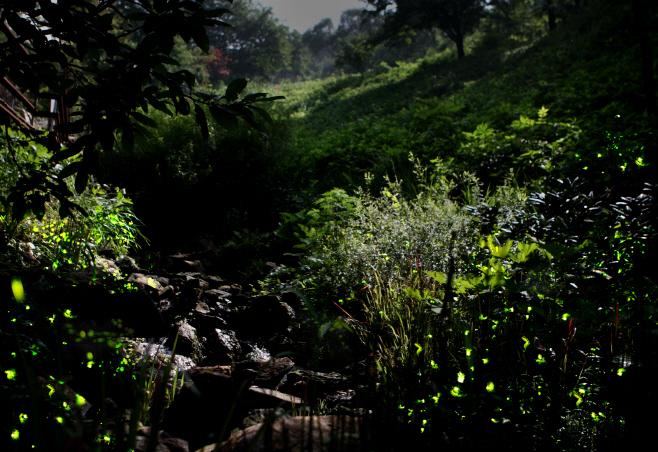 여행/ 화담숲 반딧불이 이벤트