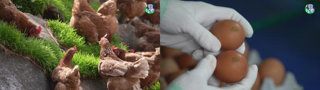 [신한카드 보도자료] 신한카드 착지프로젝트 사진 1-horz