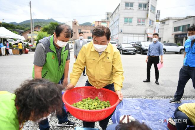 예산군자원봉사센터, '1+3 사랑나눔봉사단' 초록매실청 담그