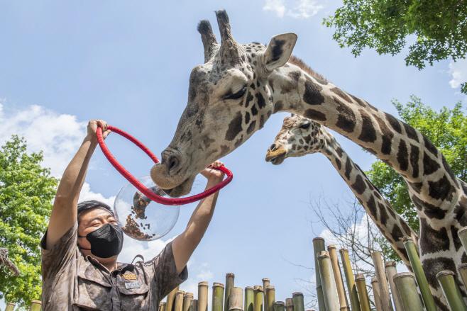 사본 -에버랜드 세계 기린의 날 (2)