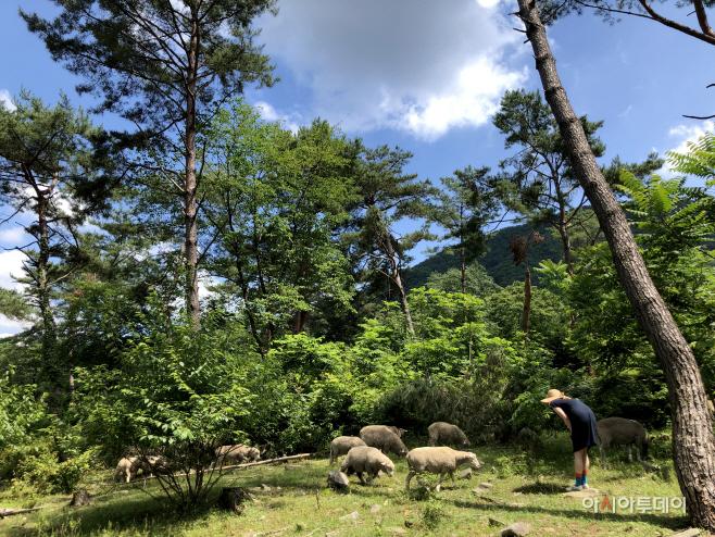 여행/ 해피초원목장